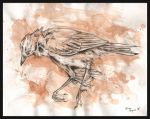 dead bird study by twistedviolet
