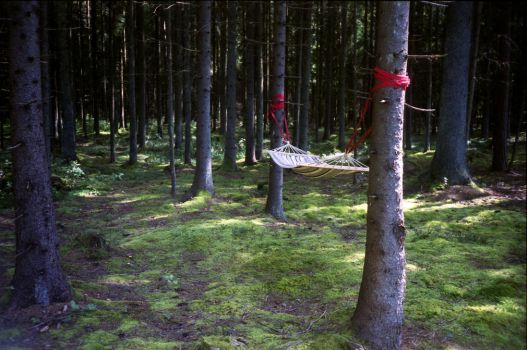 My music sleeps in the forest by Varanas