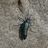 Green bug by PUBLIC-DOMAIN-PICS