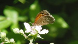 butterfly photo one by frogslave69