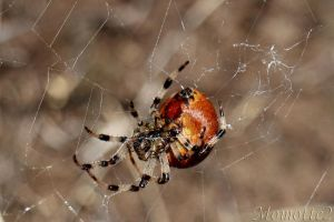 Quiet on the web by Momotte2