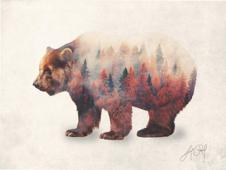 Bear (Double Exposure Animal Portraits) by lunaroveda