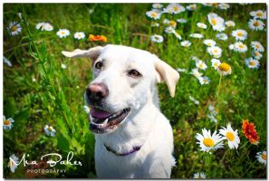 Fantine in wild flowers by Recycled-Oxygen