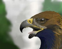 Golden Eagle by clarinetplayer
