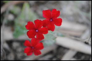 red... by garbo009