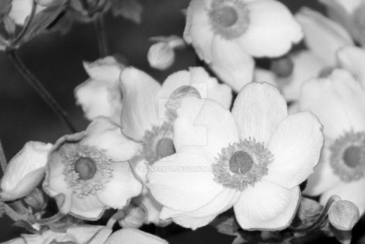 Flowers In Black and White by Frank1977