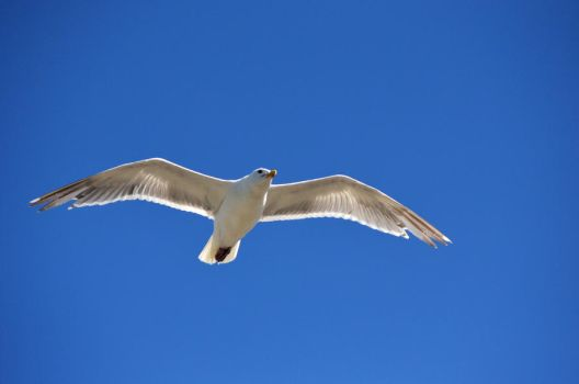 SeaGull by B-Lee