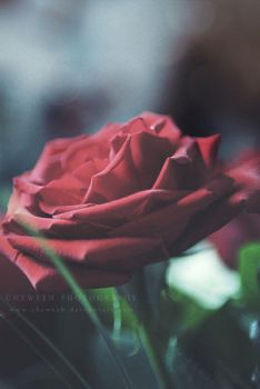 Love Grows by cheweeh