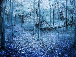 Blue Woods Stock by bmjewell-stock