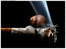 Snail In a Smoke by Sir-SiriX