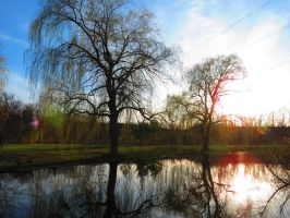 Trees Reflections at Sunset by Michies-Photographyy