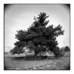 2014-330 My friends, the trees - scan105 by pearwood
