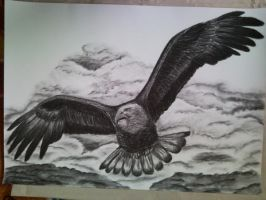 Flying eagle by ang92