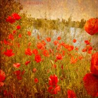 happiness of life by ildiko-neer