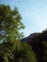 100 1664 Walking to Covadonga trees and forest by fueledbyfreestock