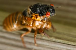 Cicada Bloom by bovey-photo