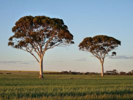 salmon gums by andipics