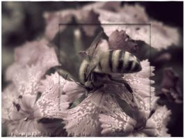 Diving Bee by sara-nmt