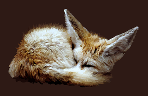 Fennec Fox by GreenFoxStudio