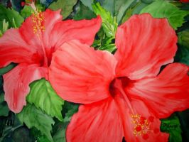 Hibiscus by p-e-a-k