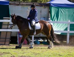 STOCK - Canungra Show 2012 196 by fillyrox