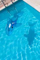 Swimmingpool with shark by archaeopteryx-stocks