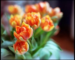 tulip 2 by restive-wench