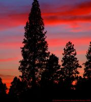 Another Montana Sunset by rocamiadesign