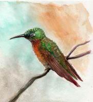 colibri by Sapiains