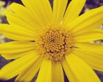 Yellow Flower by 91Elena91