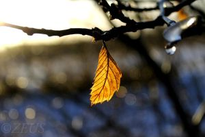 The winter leaf by ZEUS1001