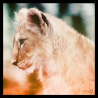 Little Lion by Globaludodesign