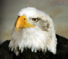 EAgle..oil painting. by rahulsilverfang
