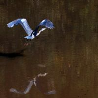 Wingspan 2 by Brian-B-Photography