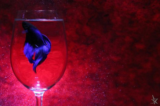 Betta Fish by rachie-ng