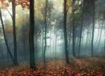 Dreamy Woods by comsic