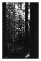 2014-219 Quiet evening woods by pearwood