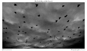 The Dark Sky and the Crows 2 by yellowcaseartist
