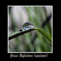 Grass Reflection Updated by FireflyPhotosAust