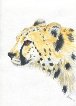 cheetah 1 by dimasbka