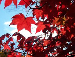 Red Fall 1 by janus002