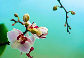orchids out for some air by ashapiro515