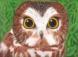 Northern Saw-Whet Owl by lemon-stockings