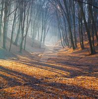 Autumn mood in a forest early in the morning by jaroslavnisler