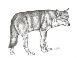 Grey wolf by Sphynxes
