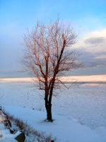 Winter Tree-3 by Rubyfire14-Stock