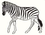 Zebra by ReQuay