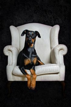 Royal Dobe by cren