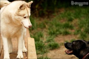 Conversation by ILTBY