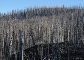 Burned Forest by AFL